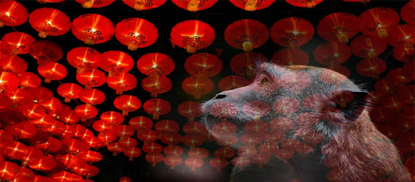 Last Minute Plans for Chinese New Year