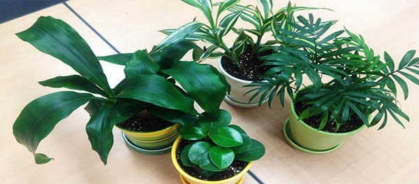 Goodbye Indoor Air Pollution! Hello Air Purifying Plants!
