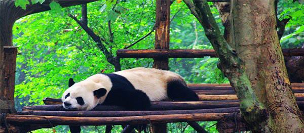 Golden Week Escape Spot 1 – Chengdu