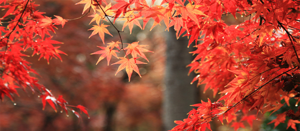 Hidden Places for the Red Leaves