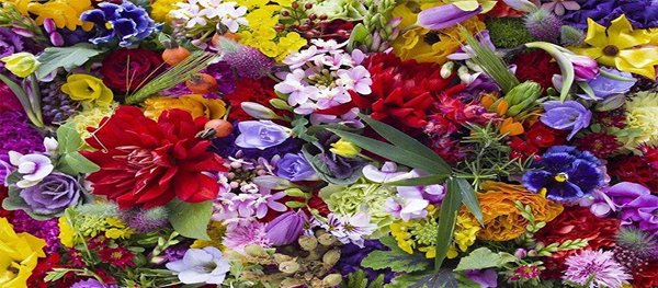 Get Some Flowers to Decorate Your Home