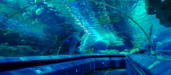 Kid Adventure 3 – An Ocean Dive at Beijing Aquarium